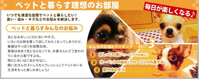 pet_box1
